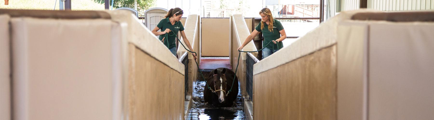 Platinum advisor with her horse
