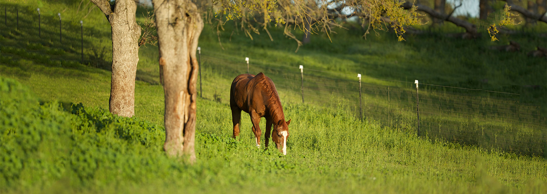 Senior Horse Supplement Supplements For Older Horses Equine