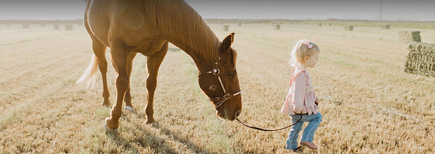 Senior Horse Feeding And Supplements