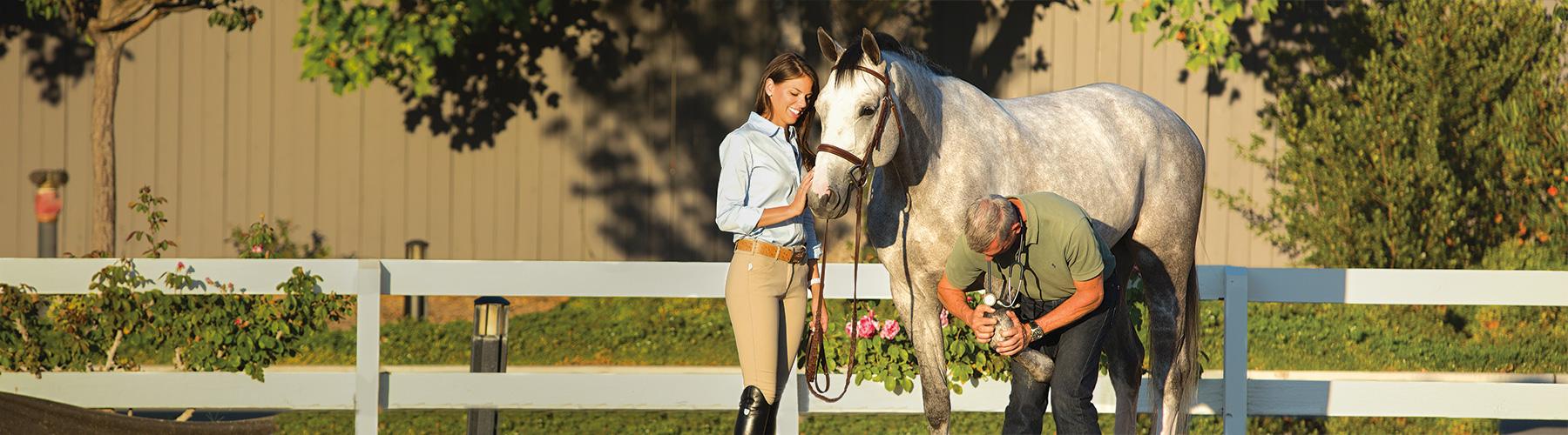 Vet checking horse's knee