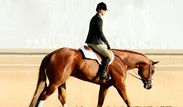 Leslie Lange Performance Horses