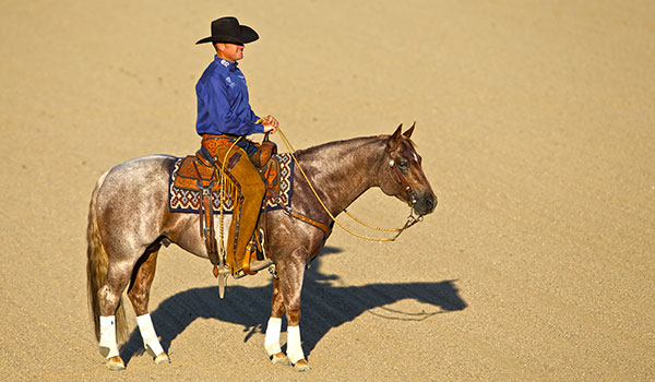 Clayton Edsall Cow Horses